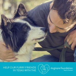 Helping our Furry Friends in Texas