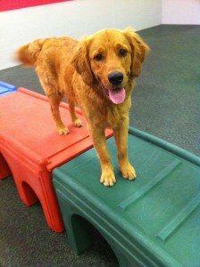 dogtopia play room
