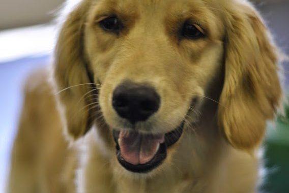 Dog Daycare Coquitlam
