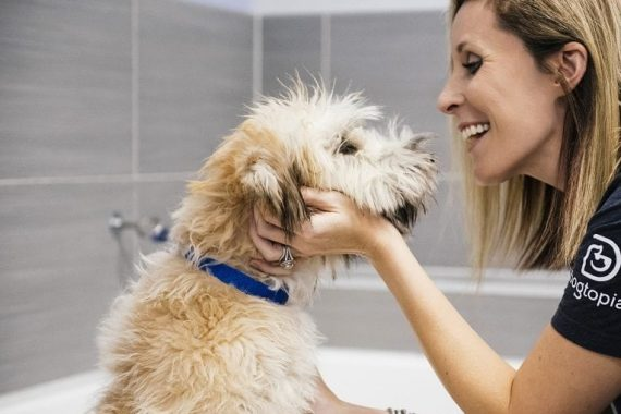 Dog feeling fresh and clean after spa bath