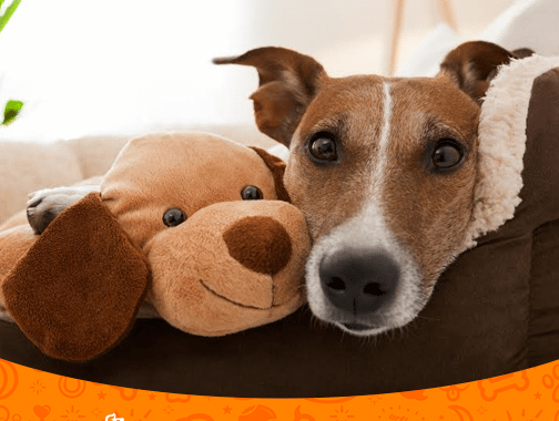 Dog Cuddling with Dog Plush
