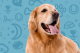 Golden Retriever Tongue Out Banner