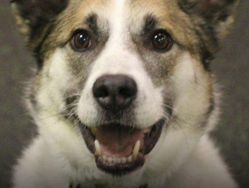 Jasper from Dogtopia Erindale