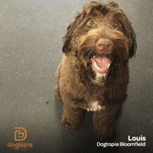 Louis from Dogtopia Bloomfield