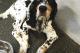Fritz from Dogtopia Nashville