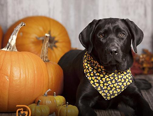 Dogtopia Halloween Theme