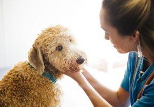 Petting happy dog