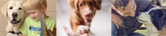 Dogtopia Foundation