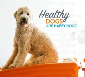 Healthy Dogs are Happy Dogs