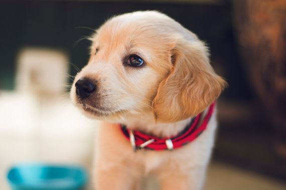 Cute puppy ready to play