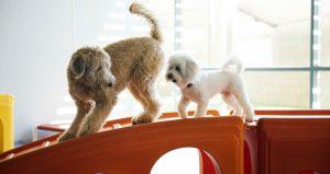 Big Dog and Small Dog Playing