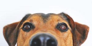 Close Up of Dog's Eyes