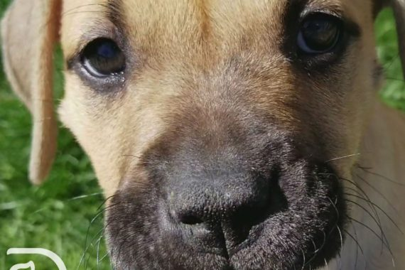 Puppy close up