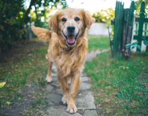 Dog running towards the camera