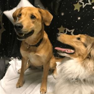 Socializing between best furry friends