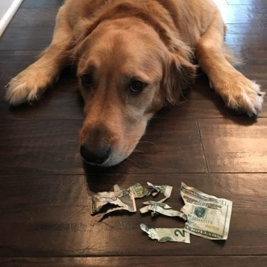 Dog Chewing Money