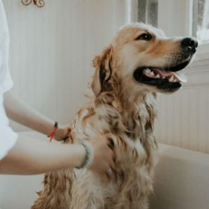 Dog get pampered up