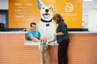 Dog reception at Dogtopia
