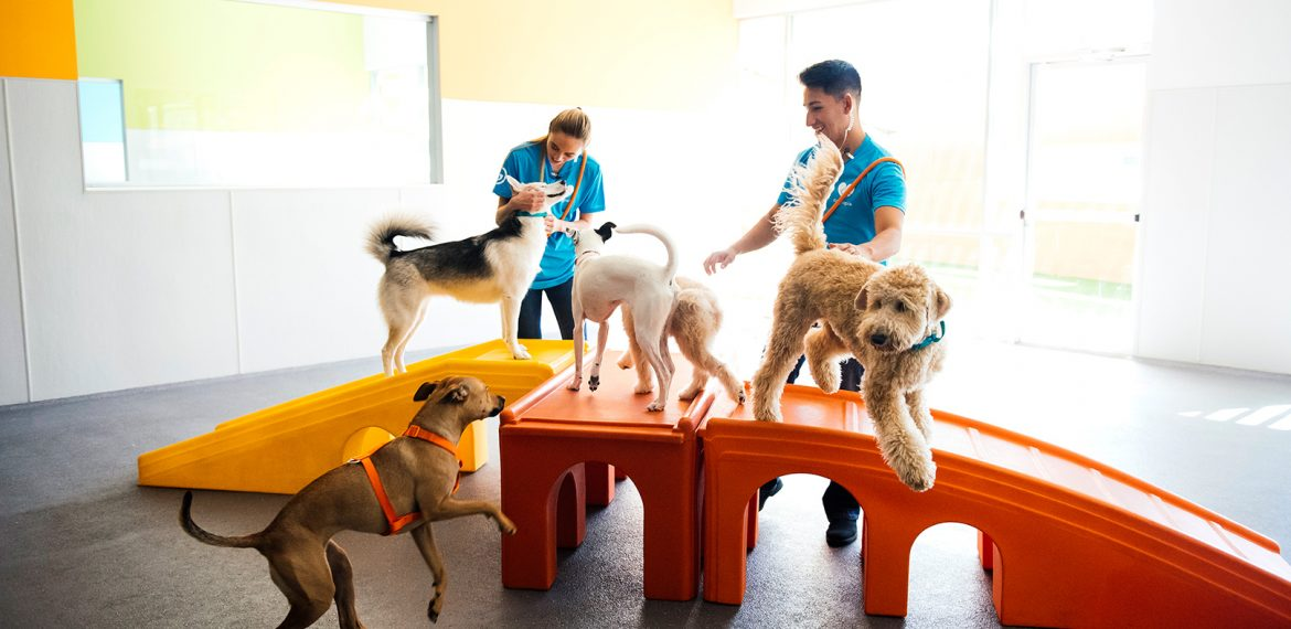 Dogtopia workers playing with dogs