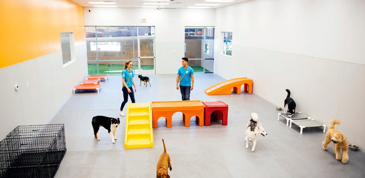Dogtopia dog playroom