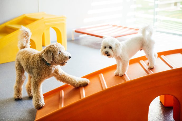Two dogs playing in a dogtopia dog daycare playroom