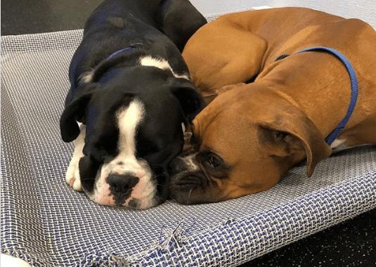 Two Doggies Cuddling