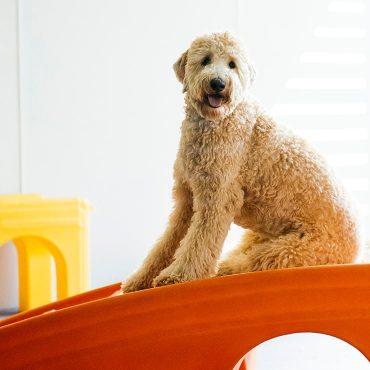 Dog on slide