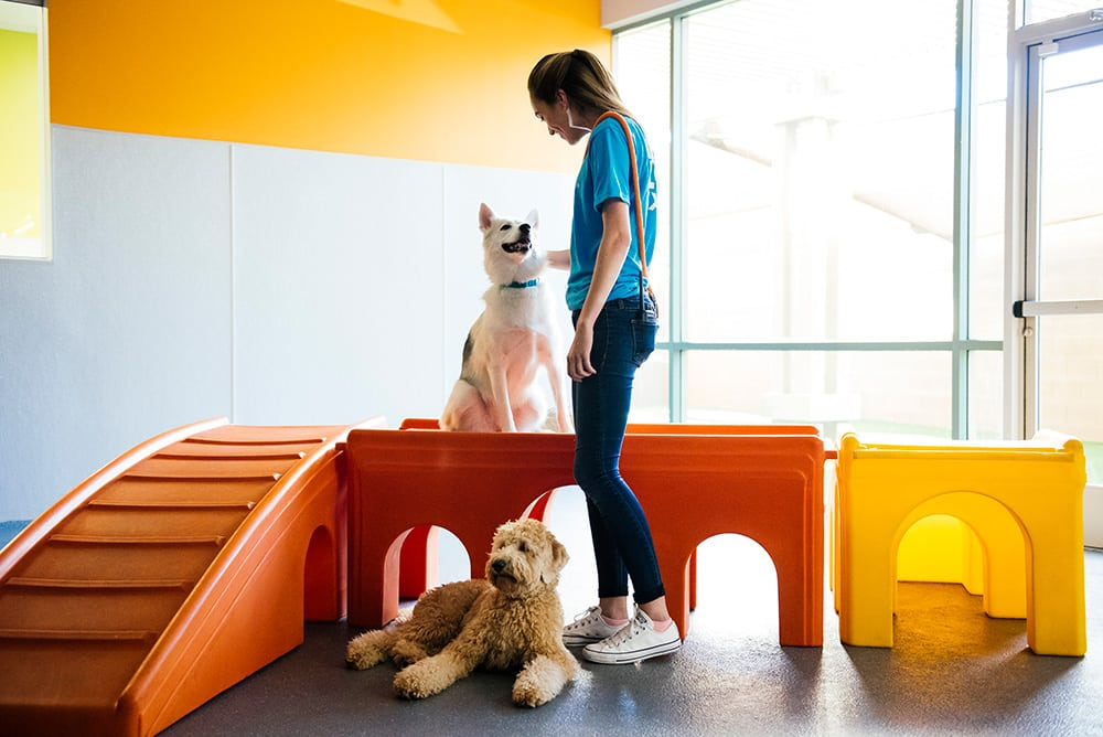 Dogtopia worker petting a dog in the playroom