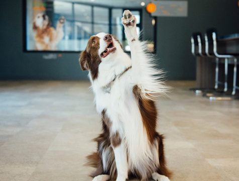 Training dog to raise their paw