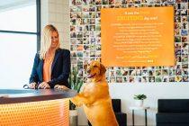 Dog at Dogtopia Counter