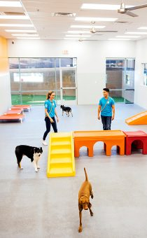 Playful dogs running in playroom
