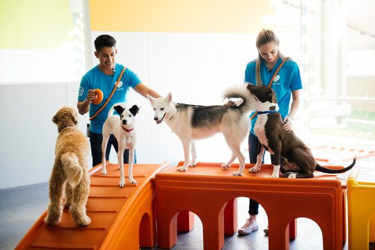 Dogs on Dogtopia Play Structure