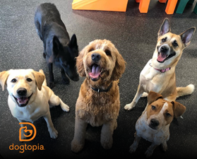 Dogs Behaving Well at Dogtopia