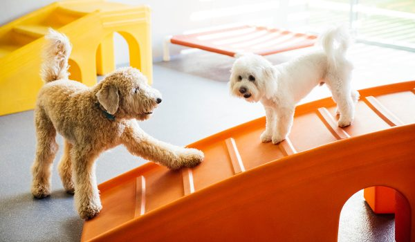 Dog Daycare, Spa, Boarding | Dogtopia San Jose