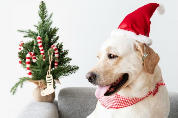 Dog in the Christmas hat