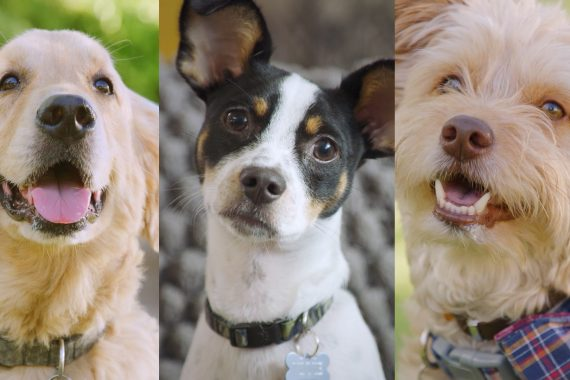 Three dogs profiles