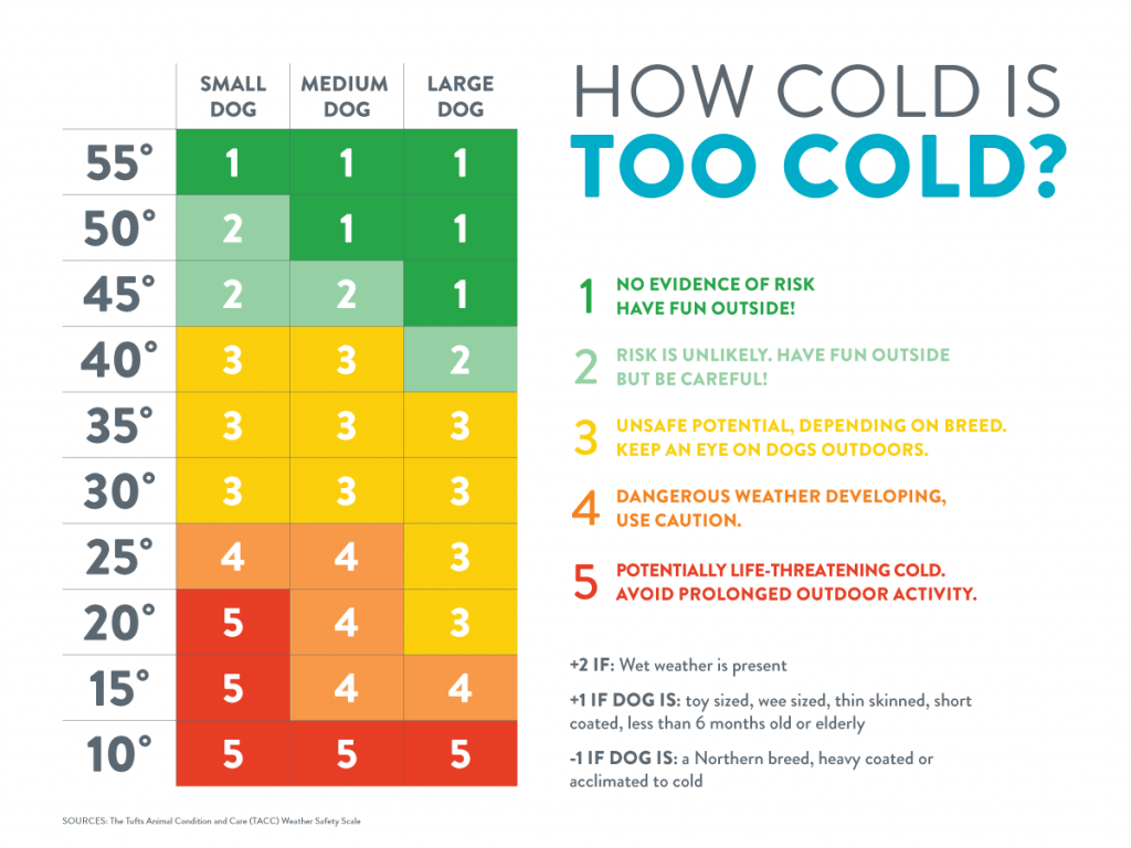 dog-too-cold-infographic-1