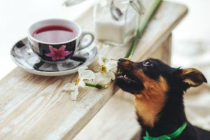 Dog Sniffing a flower