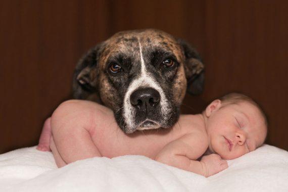 Big Dog and Small Baby