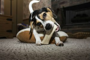 teething-puppy-tips
