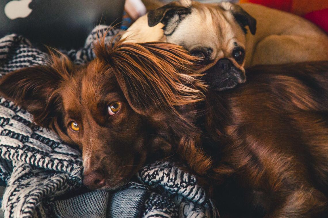 Sommet ultime des propriétaires de chiens en ligne