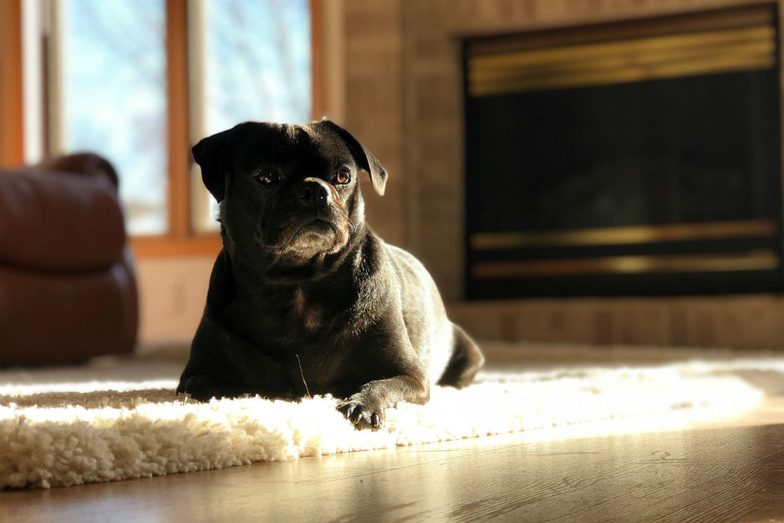 ménage de sécurité de chien