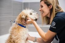 Dogtopia worker washing a dog