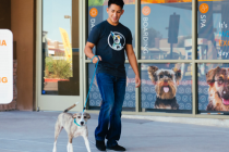 Dogtopia worker walking a dog