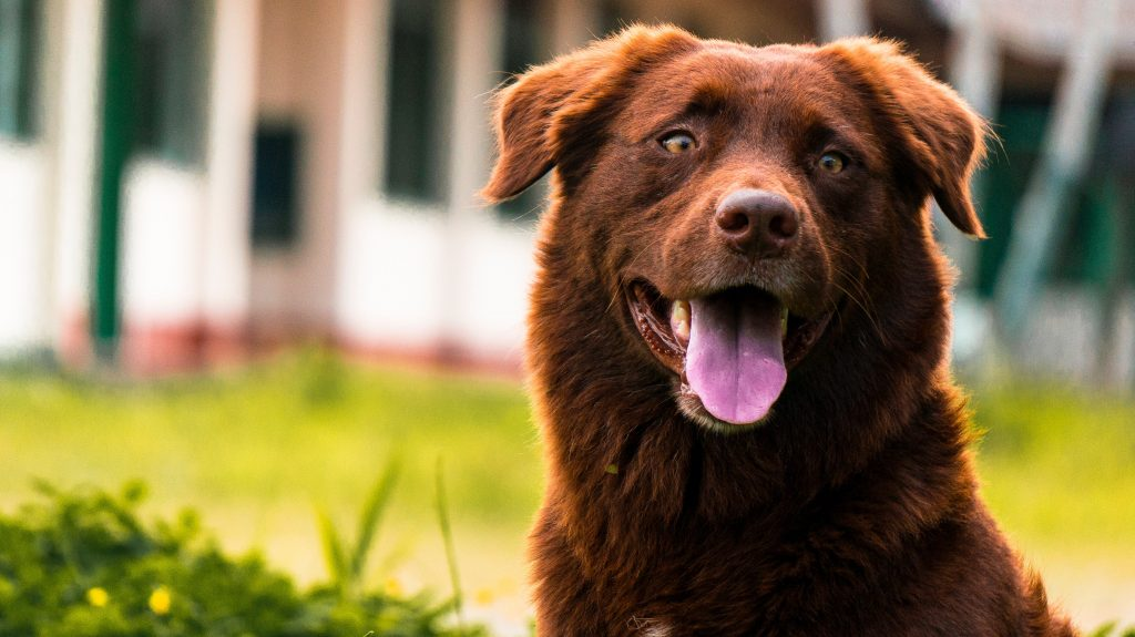 8 kid-friendly dog breeds - Dogtopia