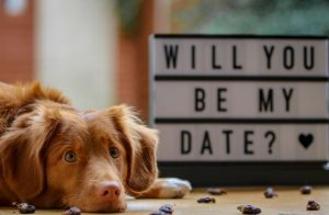 valentines day with dog