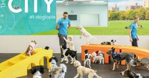 Inside Dogtopia playroom