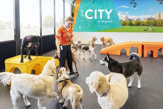 Dog daycare versus dog park benefits