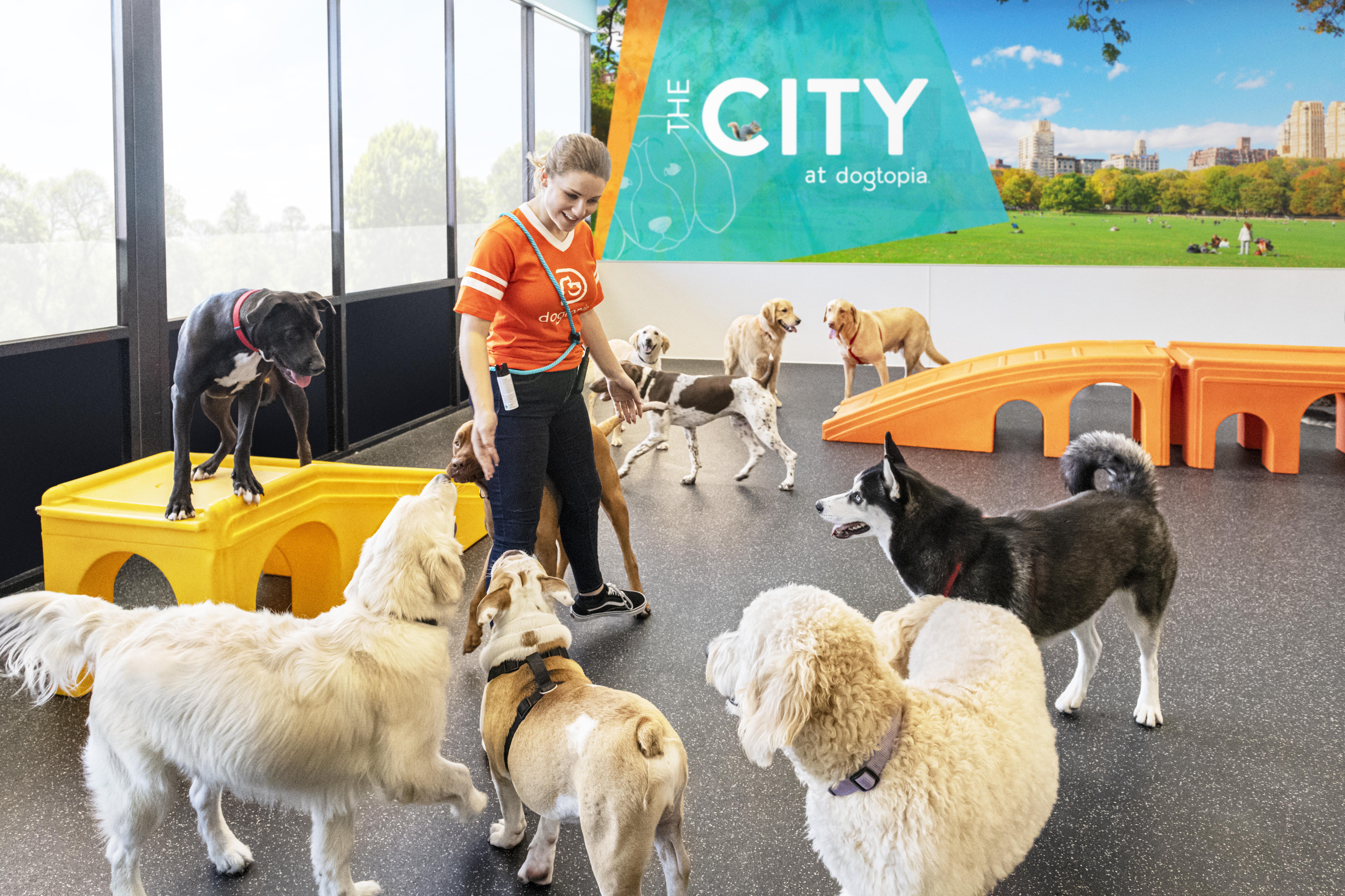 Garderie pour chiens par rapport aux avantages du parc pour chiens