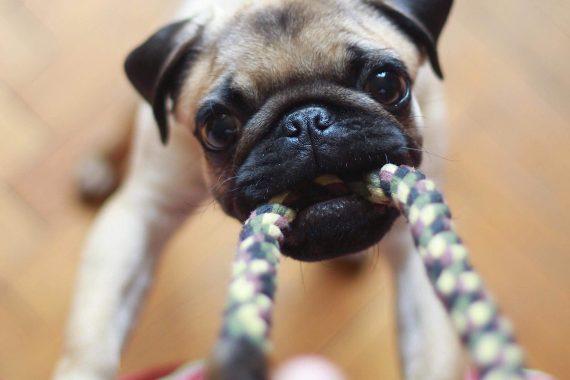 DIY dog toys